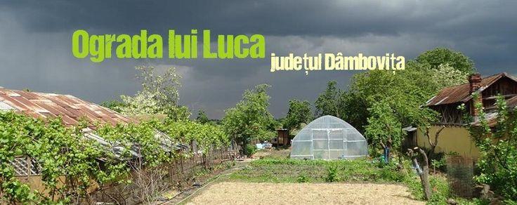 OGRADA LUI LUCA, LEGUME ȘI FRUCTE PENTRU COPIII SPORTIVI http://platferma.ro/ograda-lui-luca-legume-fructe-dambovita/