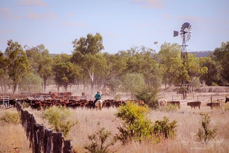 """A day spent in the paddock is worth a dozen spent elsewhere"" Central Western QLD. Credit to: Louise Stonehourse"