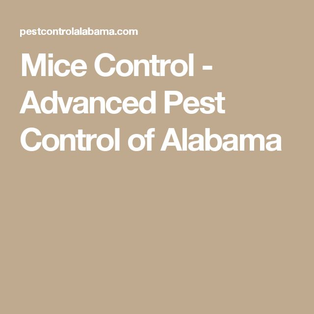 Mice Control - Advanced Pest Control of Alabama