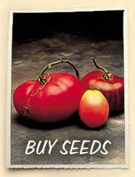 Tomato Seeds - Collections of Special Heirloom Tomato Varieties
