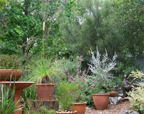 Australian native plants in pots in a small suburban garden © Graham Oliver