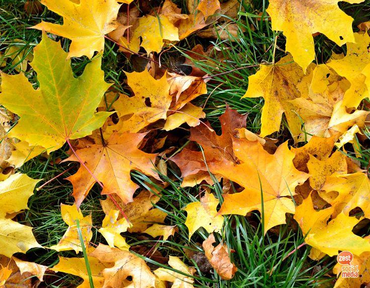#november #autumn #leaves