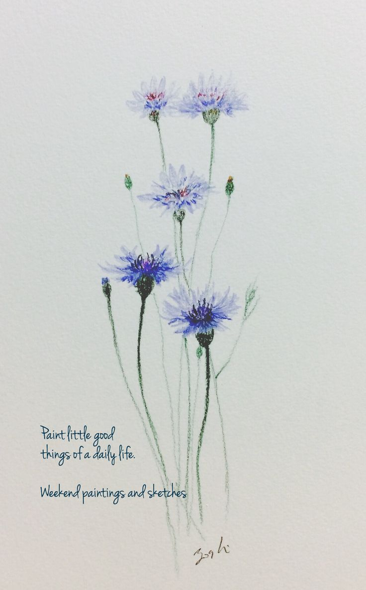 Cornflowers 3 Watercolour pencils Paper: Winsor & Newton COTMAN 227 x 158mm Language of flower: delicacy, refinement