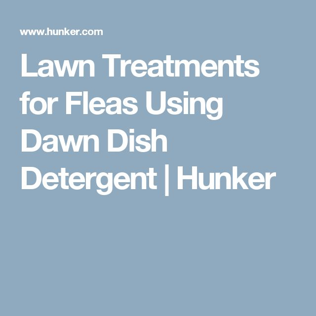 Lawn Treatments for Fleas Using Dawn Dish Detergent | Hunker