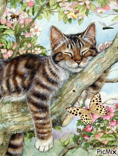 Image result for kittens & butterflies gif