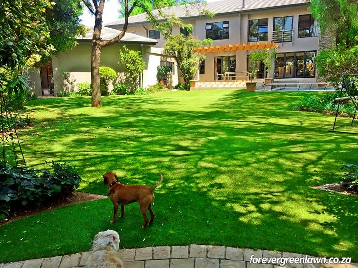 Client garden with artificial lawn in Kyalami Estate, Midrand, Johannesburg.