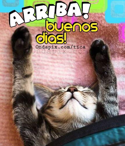 arriba buenos dias #animales #gatos