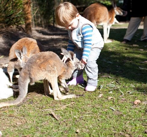 Top 10 Family Attractions in Perth