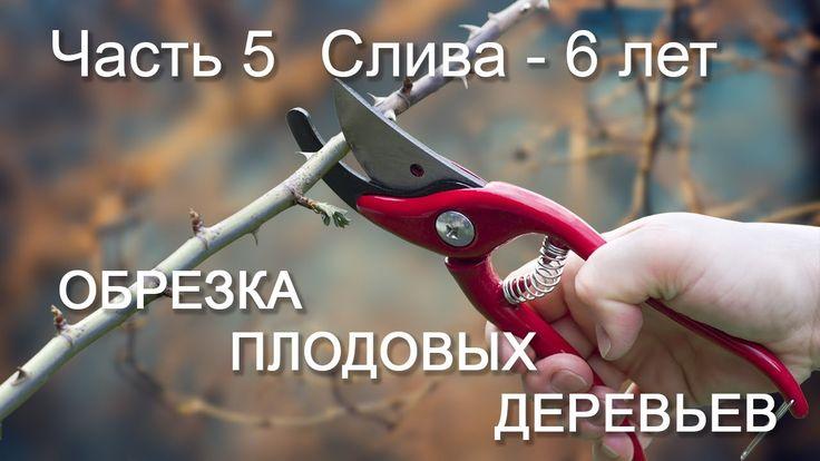 Обрезка плодовых деревьев Часть_5