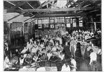 The Australasian Jam Company factory during harvest season, 1906.