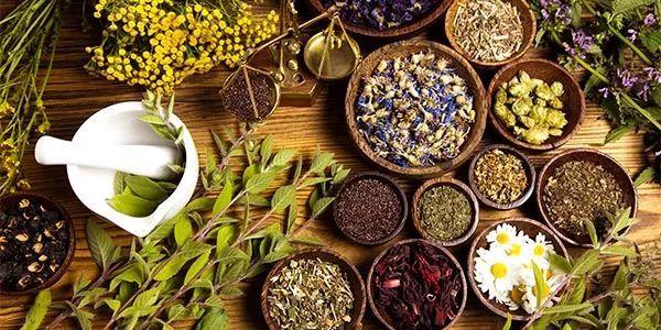 Le piante officinali che possono sostituire paracetamolo e ibuprofene
