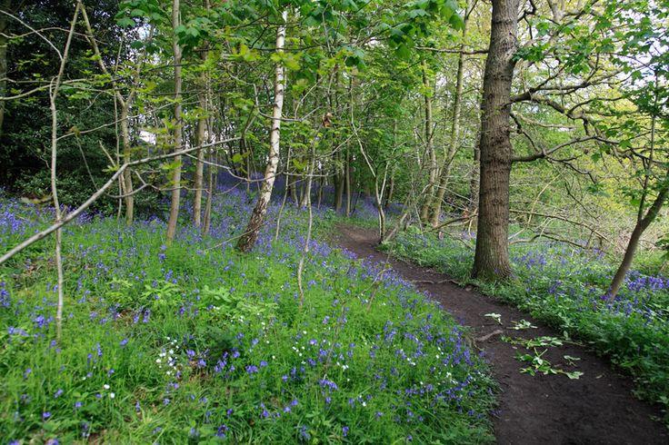 Hetchell Woods near Bardsey