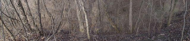 Jurnal A: pădurea dezbrăcată după iarnă