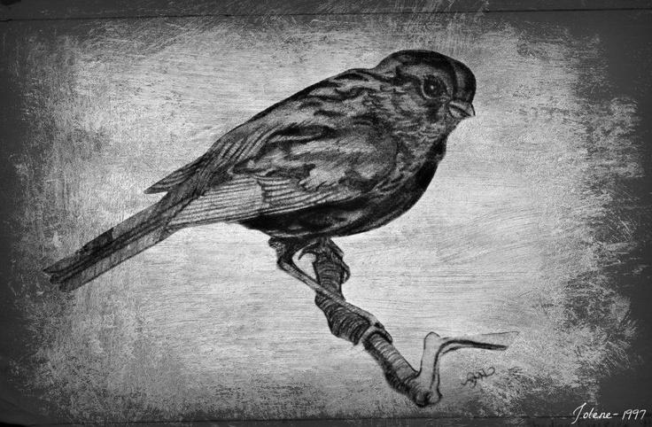 Bird sketch 1997 by Jolene Hachey