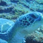 ナガンヌ島 口コミ・写真・地図・情報 – トリップアドバイザー