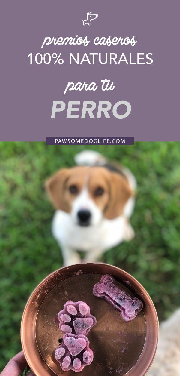 Dog Treat Recipes, Dog Food Recipes, Dog Ice Cream, Frozen Dog Treats, Dog Bakery, Pet Treats, Homemade Dog, Cat Food, Dog Toys