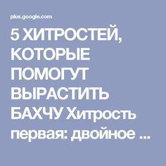 5 ХИТРОСТЕЙ, КОТОРЫЕ ПОМОГУТ ВЫРАСТИТЬ БАХЧУ Хитрость первая: двойное укрыти...