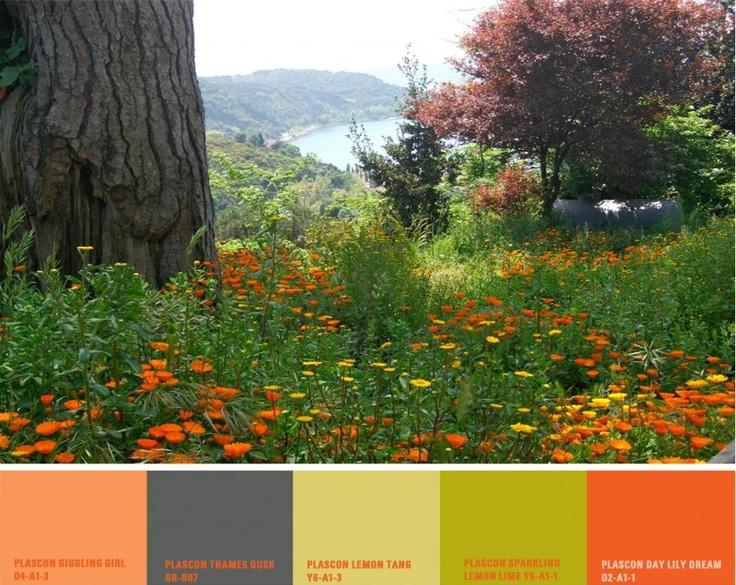 Orange in nature...