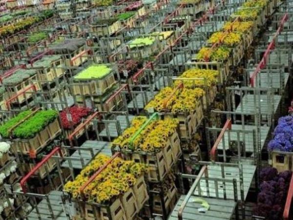 Unik, Lelang di Pasar Bunga Terbesar Dunia