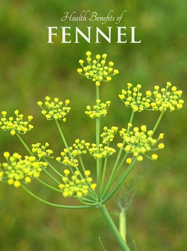 Health Benefits of Fennel - for gas relief  www.onedoterracommunity.com   https://www.facebook.com/#!/OneDoterraCommunity