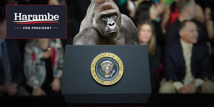 Harambe, A Dead Gorilla, Got Over 15,000 Votes For President Of The Unites States