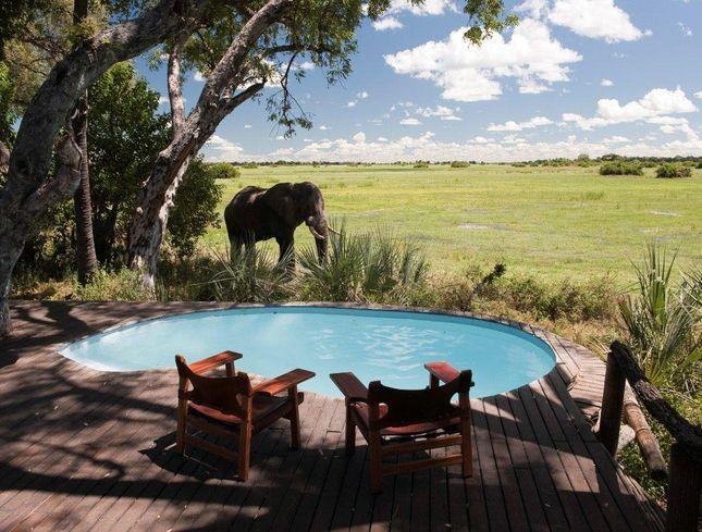 Mombo Camp, Okavango Delta