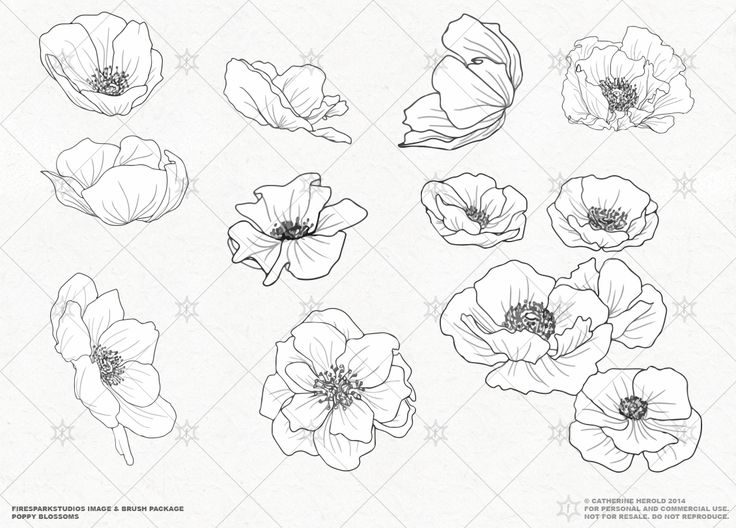 VECTOR Poppy Blossoms Illustrations by Fire Spark Studios on @creativemarket