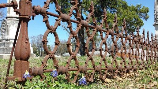 Bluebonnets ~ Oakwood Cemetery