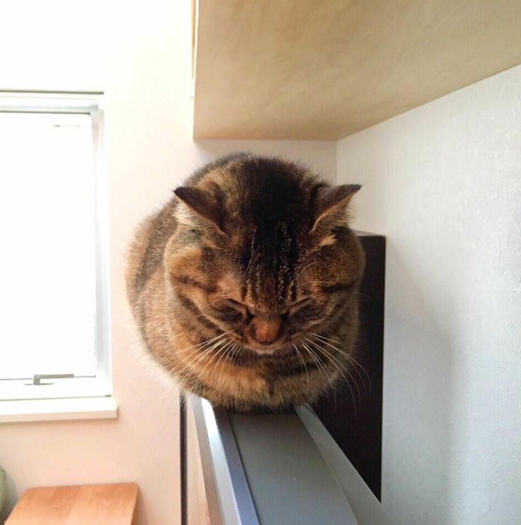 Best Cat Pictures Images On Pinterest Pictures Cute Cats - 29 cute cats that have morphed into cat loaves