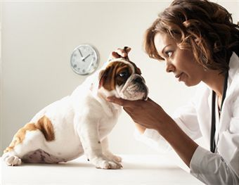 Homemade Remedies For Pets Using Essential Oils - Ear Infection Inflammation