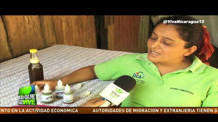 En Masatepe en la comunidad El Pochote, 12 familias trabajan con abejas meliponas.