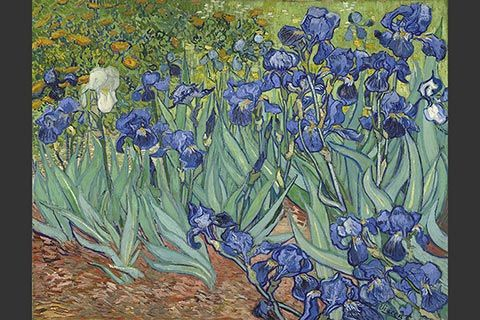 """The painting """"Irises"""" by Vincent Van Gogh, 1889."""
