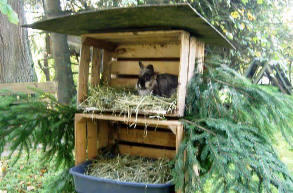 Kaninchen im Winter (Rabbit Houses Diy)