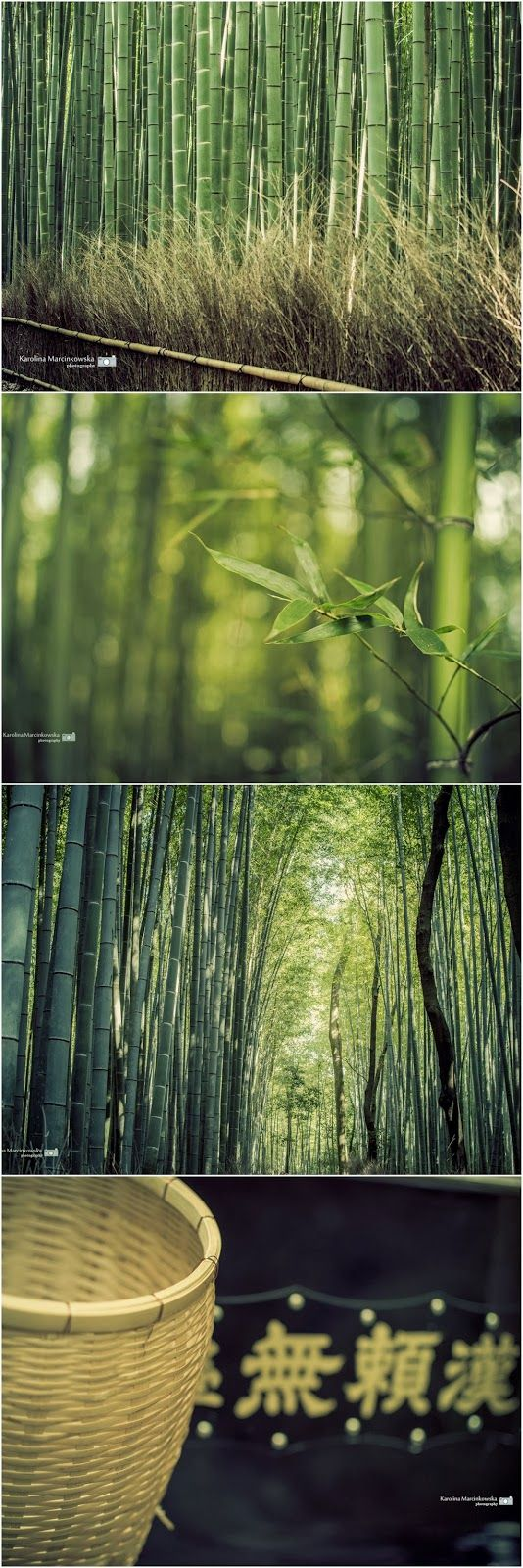 Bamboo forest - Arashiyama, Japan, Kyoto