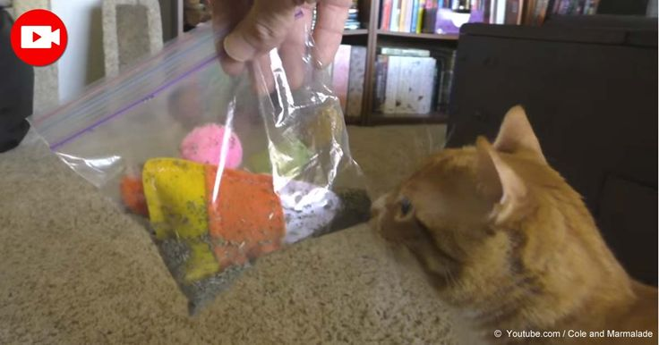 Watch the video of 5 life hacks for cat owners. An interactive whack-a-mouse game and catnip-marinated cat toys are fun ideas for entertaining your cat. http://healthypets.mercola.com/sites/healthypets/archive/2016/05/02/clever-hacks-fur-cat-owners.aspx