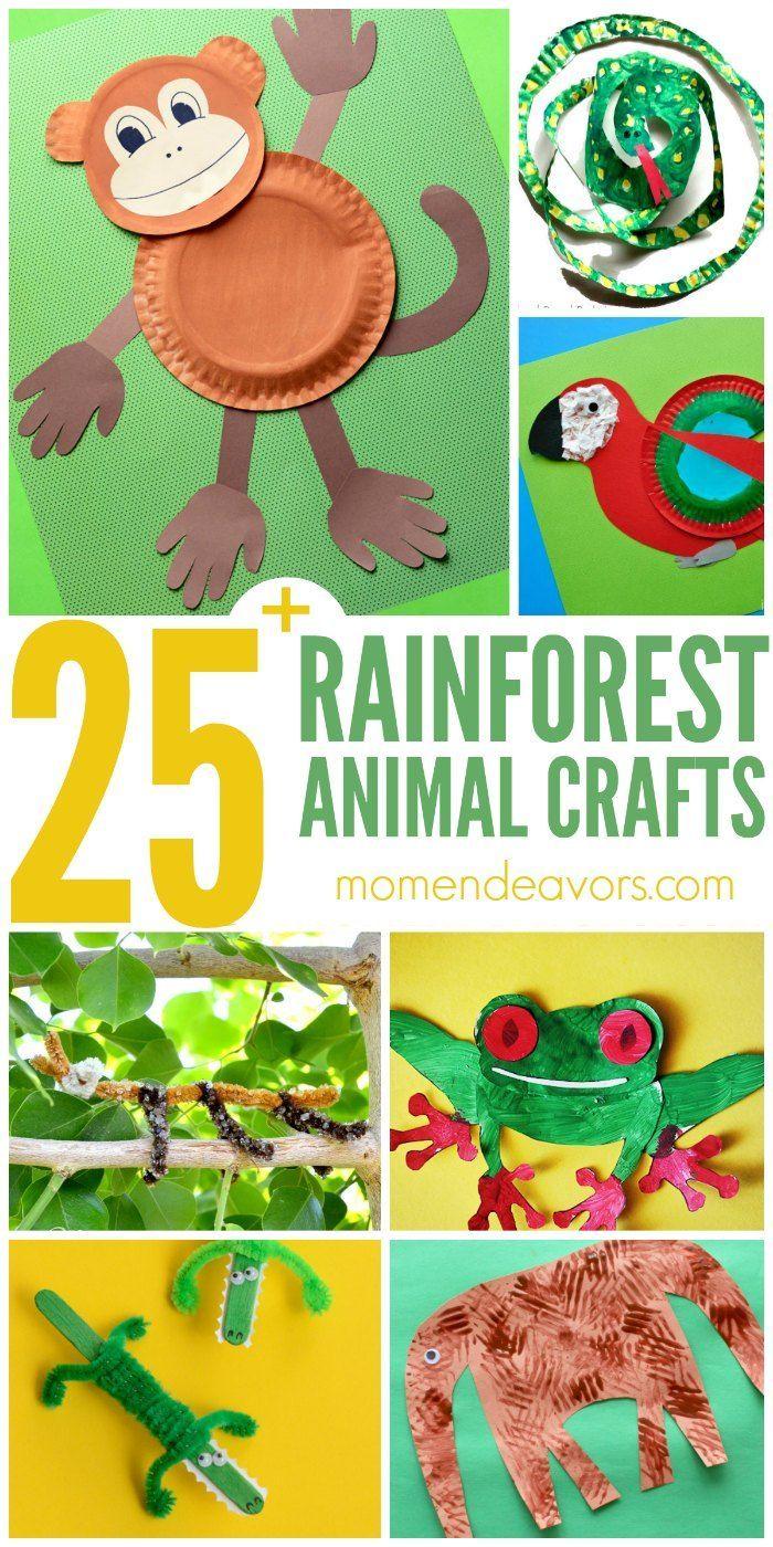 best 25 rainforest animals ideas on pinterest brazilian