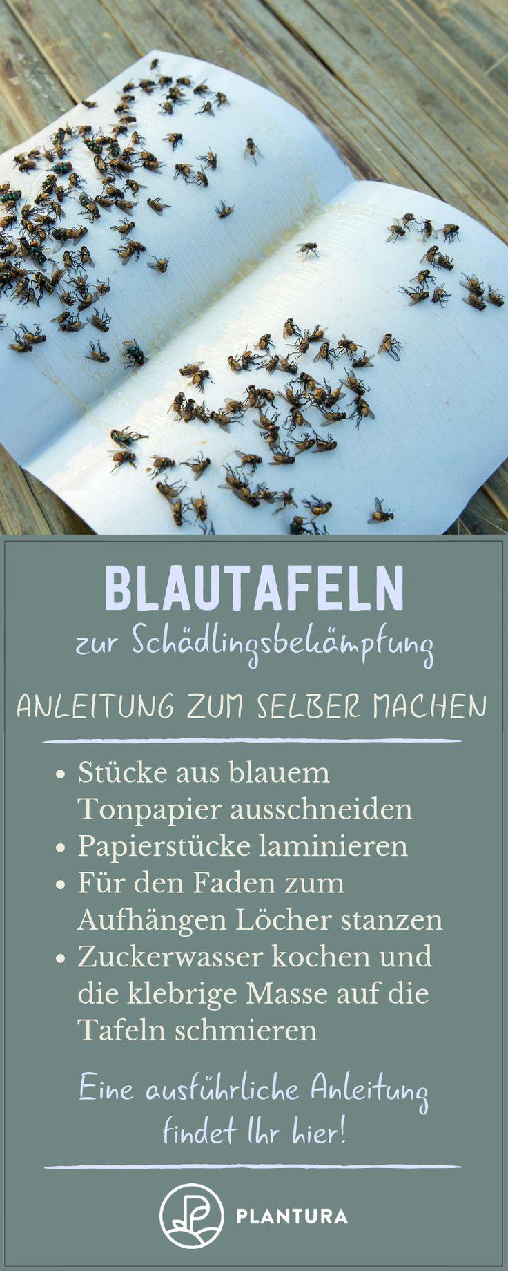 Blautafeln zur Schädlingsbekämpung: Anleitung zum selber machen! Mithilfe von …