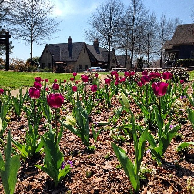 Tulips are in bloom by the Golf Shop and throughout the property. Come enjoy the beautiful images of Spring at Barnsley Resort!
