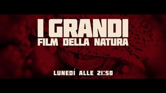 I grandi film della natura su DeASapere HD http://www.sapere.it/sapere/deasapere/programmitv/i-grandi-film-della-natura.html