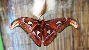 Ve skleníku trojské Botanické zahrady opět můžete obdivovat exotické motýli na tradiční výstavě, tentokráte pořádané od 5. dubna do 8. května.