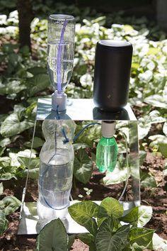 Pesquisador cria irrigador solar automático com garrafas usadas - Portal Embrapa