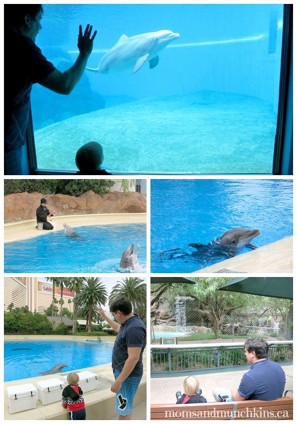 Siegfried & Roy's Secret Garden and Dolphin Habitat #LasVegas