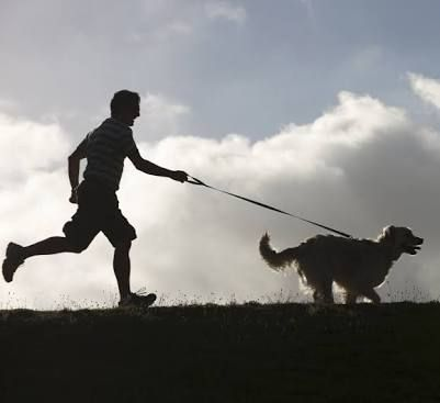 Image result for run with dog
