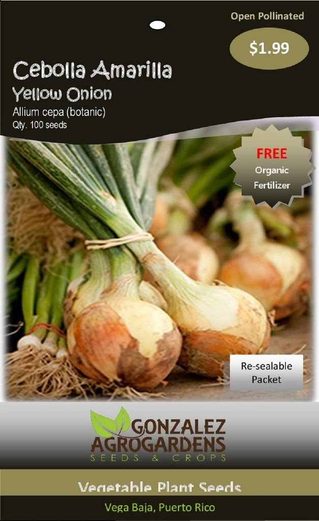 Onion Seeds - Sturon - Groseeds