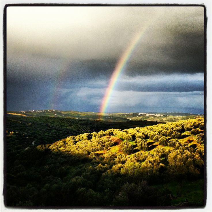 After the #rain. #Cretan #vineyards Μετά τη βροχή στους κρητικούς Αμπελώνες Wines of Crete #wine #winesofcrete #crete