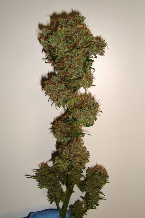 Weed picture