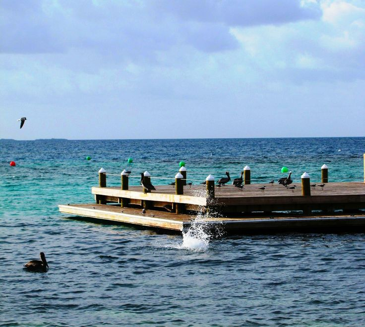 Time for a rest on the docks after a long day of fishing for our local experts, the Pelicans! #HatchetCaye #BelizeBeachResort