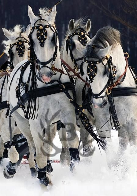 Horses in the snow. Love it!