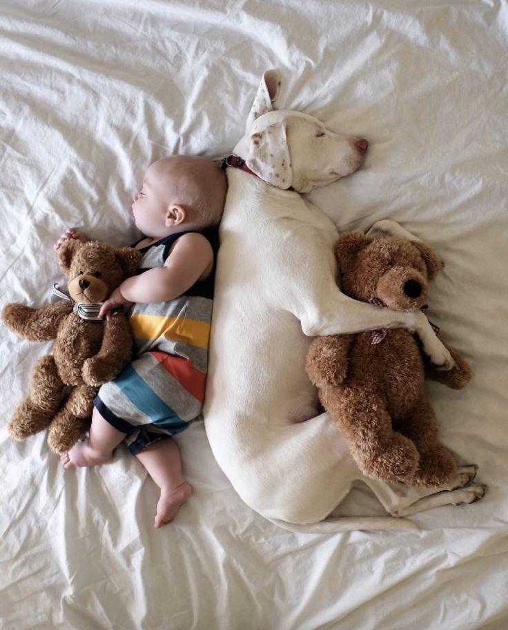 この心温まる光景は、カナダに住むエリザベス・スペンスさんの息子、アーチーくんとイングリッシュポインターのノラちゃん。毎日一緒にお昼寝をしている姿をイン...