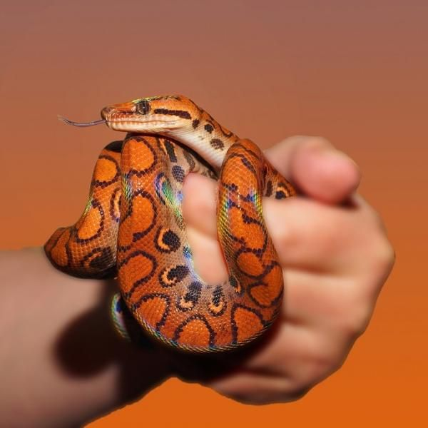 Pasos a seguir ante la mordedura de una serpiente - ExpertoAnimal